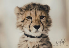 Load image into Gallery viewer, Untameable Cub A1 (59.4Cm X 84.1Cm) / Colour Photographic