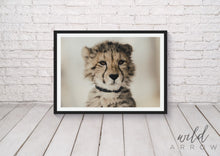 Load image into Gallery viewer, Untameable Cub Photographic
