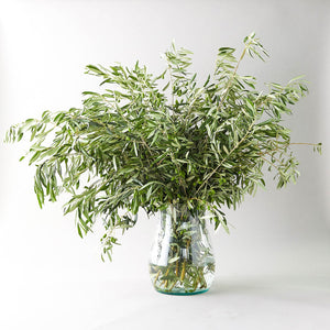Fresh Olive Branches - Fresh Olive Stems - Wedding