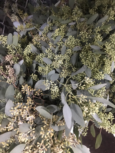Fresh Seeded Eucalyptus - Farm Fresh Eucalyptus