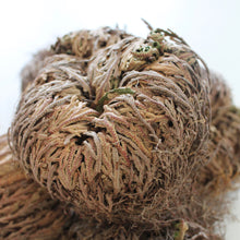 Load image into Gallery viewer, Rose of Jericho. Resurrection Plant. Prosperity. Good Fortune. Protection. - Lesley Saligoe Botanicals