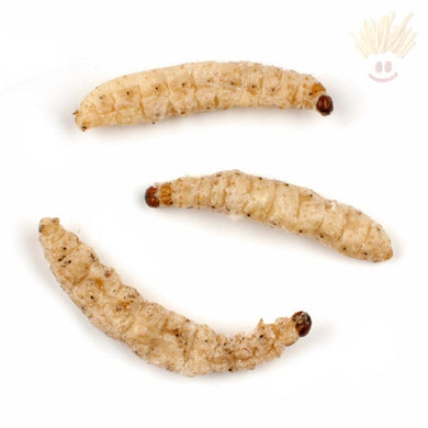 Edible Bamboo Worms Novelty Snacks
