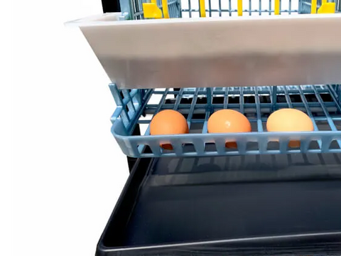 Manure Tray Sliding Out of 1 Layer Chicken Breeding Cage - Hatching Time