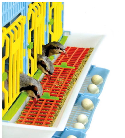 Partridge Using Smart Feeding To Save On Feed Loss - Hatching Time