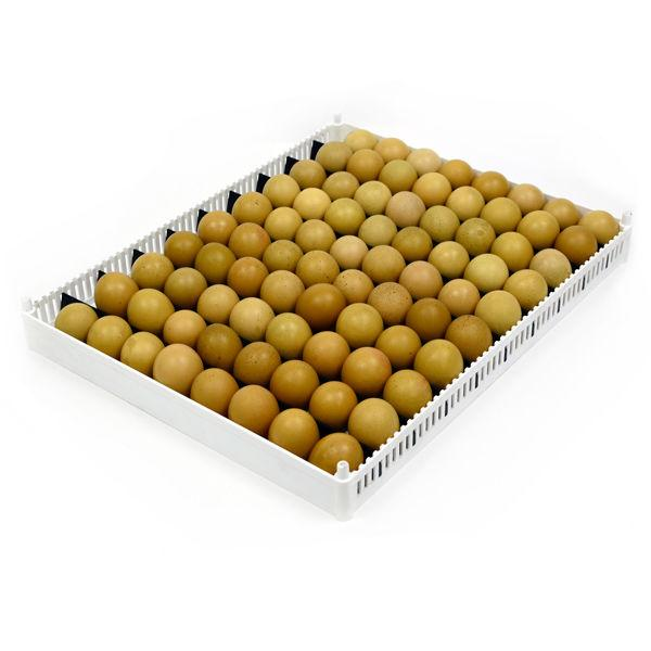 Full Tray of Eggs in Flexy 80 - Hatching Time