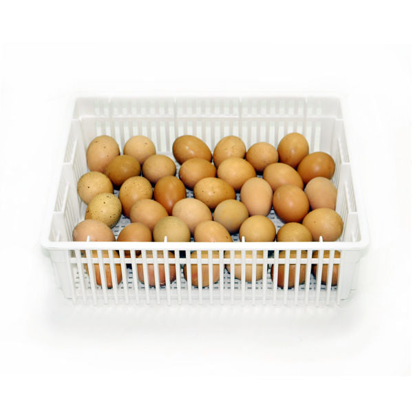Egg Basket - 35 Eggs -(CS35Y) - Hatching Time