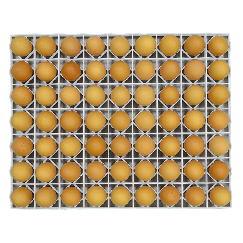 Egg Setter Tray - Chicken - 80 eggs - Hatching Time
