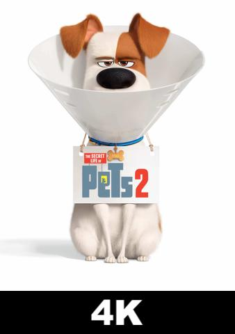 Secret Life of Pets 2 (4K iTunes / 4K VUDU)