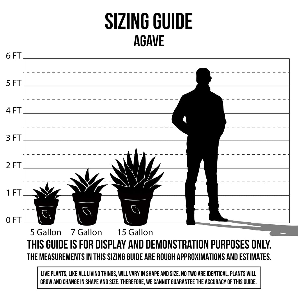 Sizing Guide Agave