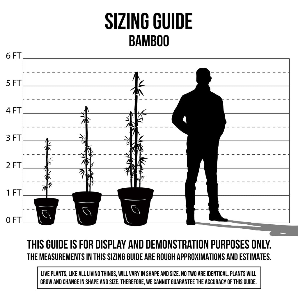 Plant Sizing Guide Bamboo