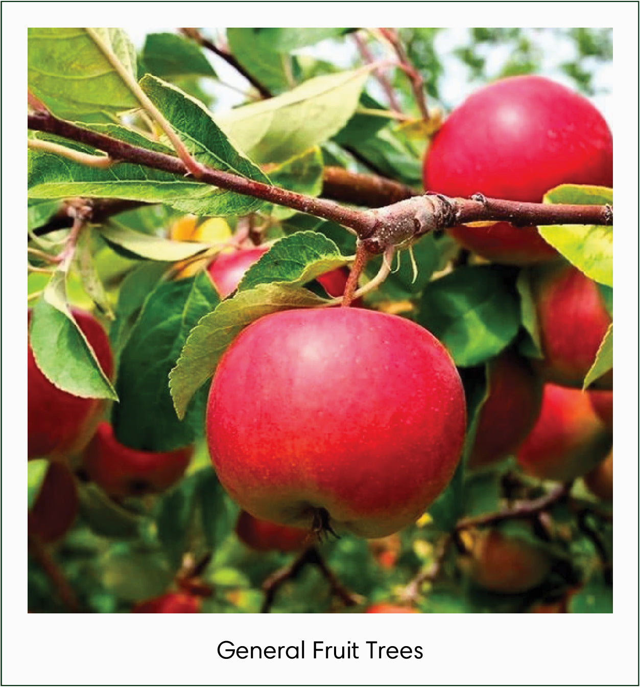 General Fruit Trees