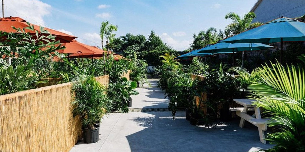 Outdoor Plants for Business