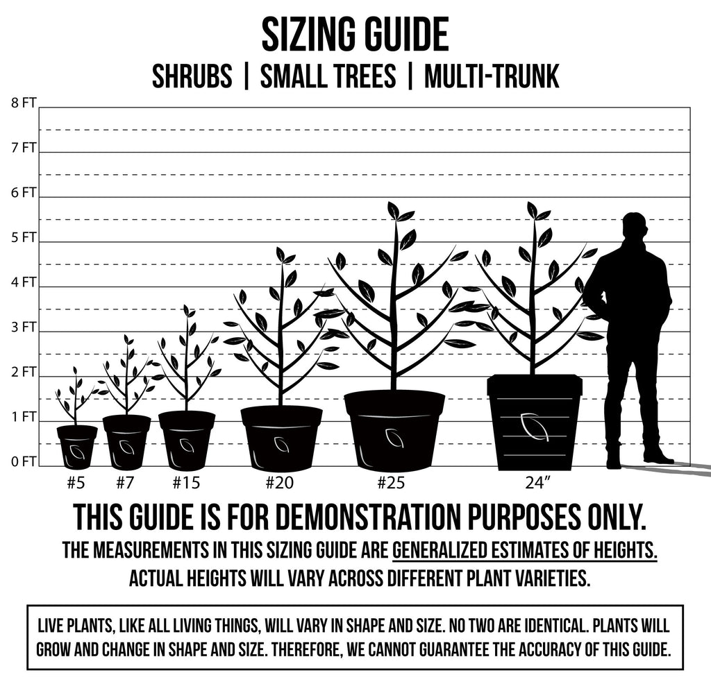 Sizing Guide - Shrubs, Small Trees, Multi-Trunk
