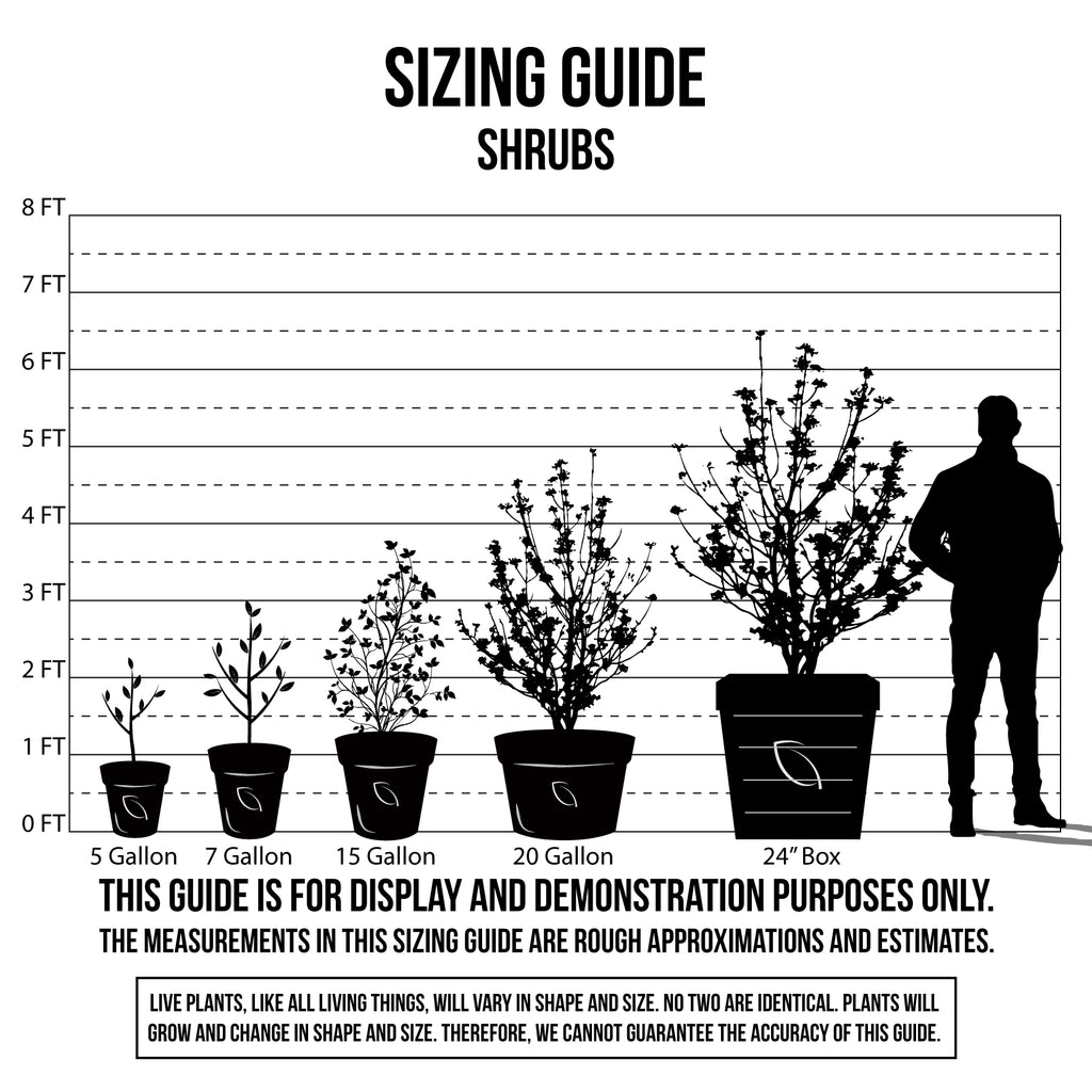 Sizing Guide Shrubs