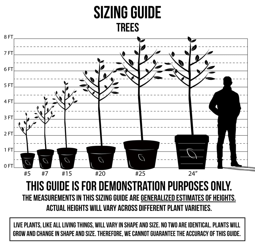 Sizing Guide - Trees