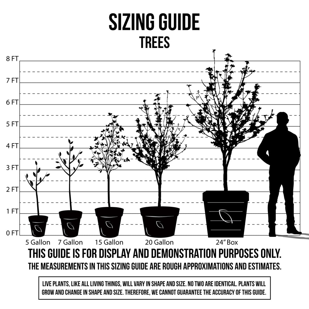 Sizing Guide Trees