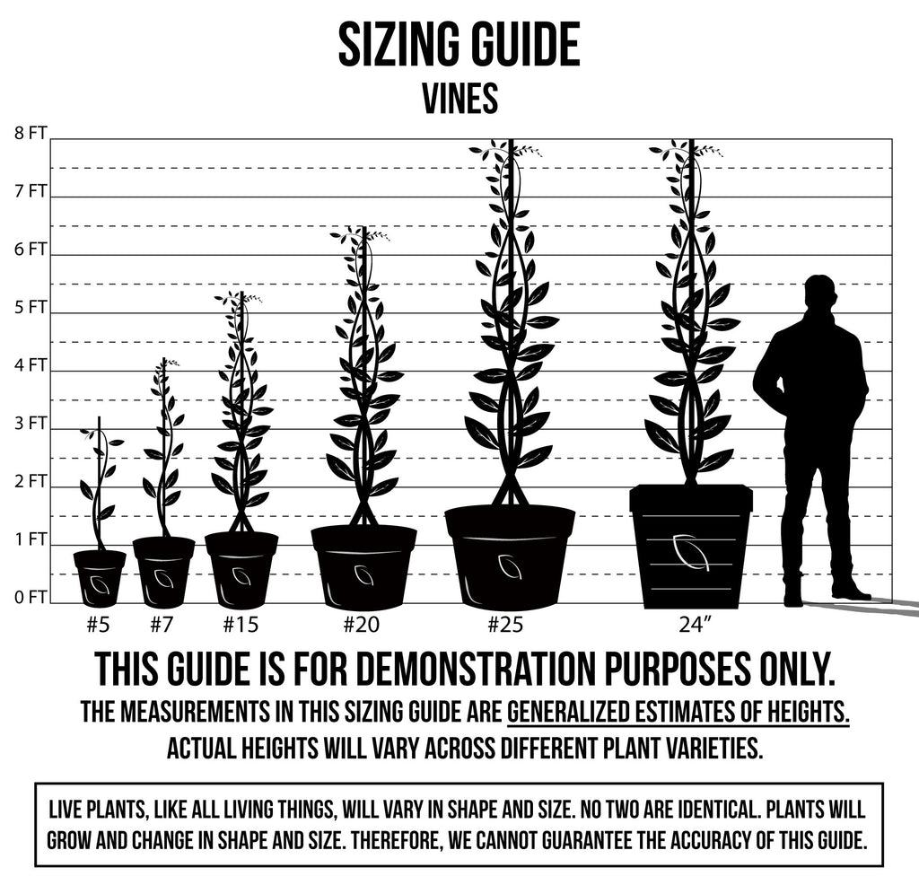 Sizing Guide - Vines