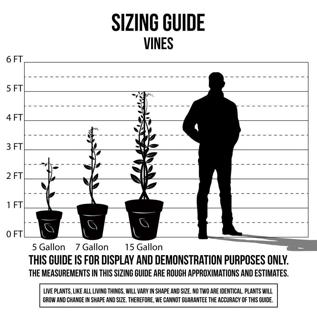 Sizing Guide Vines