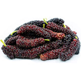 Pakistan Mulberry - C&J Gardening Center