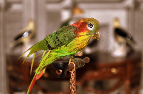 ESTATE TREASURE: Pet Parrot on Stand by Annie Willis - Fine Design