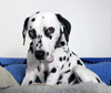 The Vicious Circle of Spots