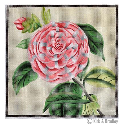 KB 049 - Striped Camellia