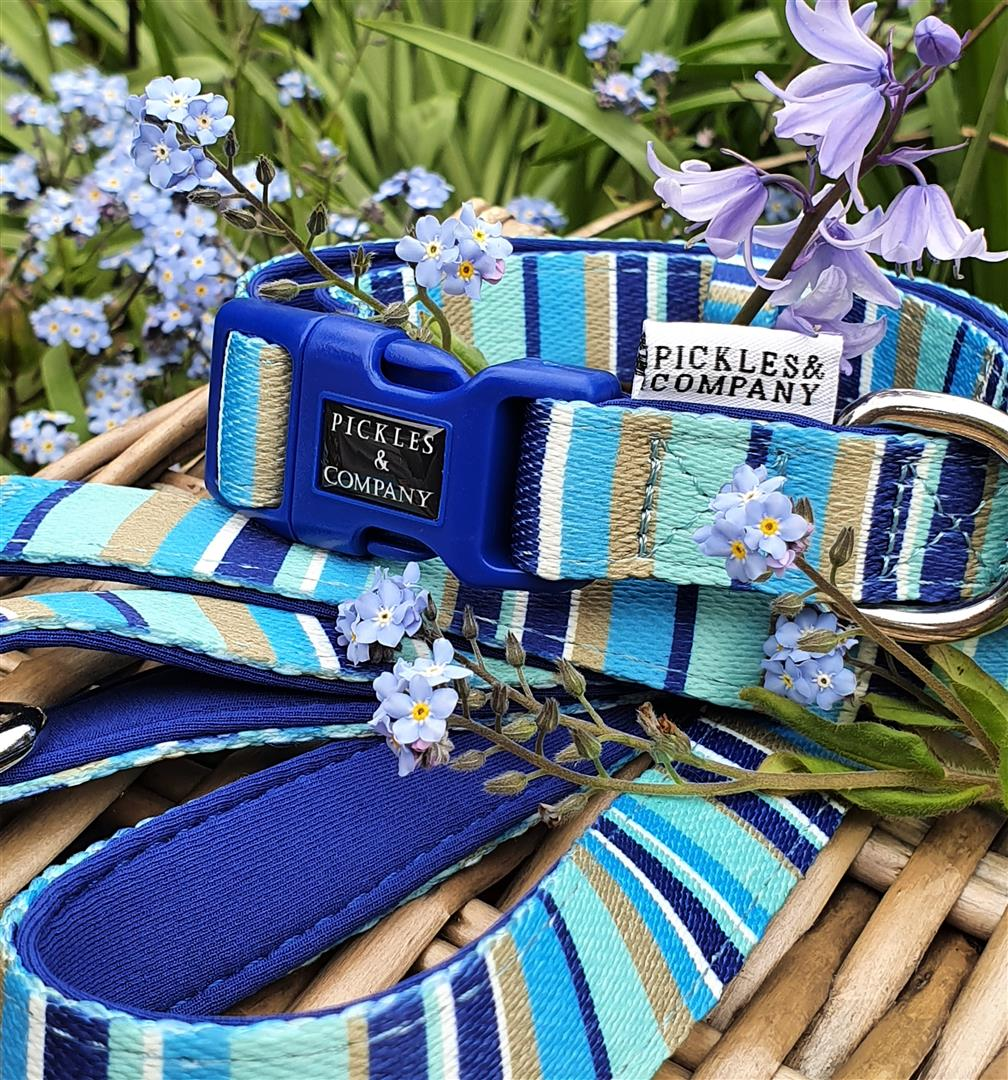 Printed Webbing and soft Neoprene Dog Collar BLUE STRIPES