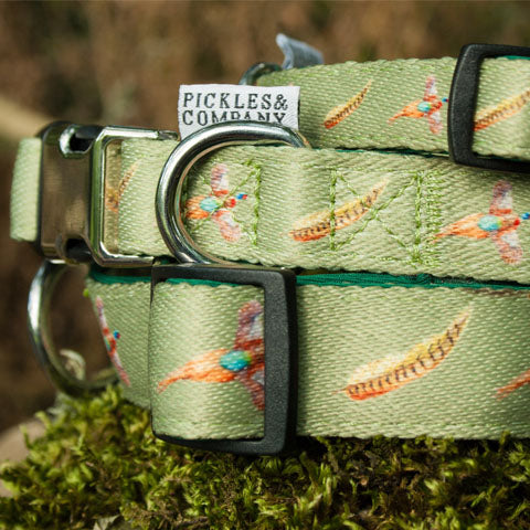 dog collar neoprene webbing green