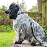 'The Burford' Herringbone & Leather Dog Collar BLACK & WHITE