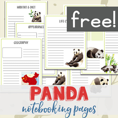 Panda Notebooking Pages