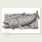 Brown Trout: Streamer Edition Print