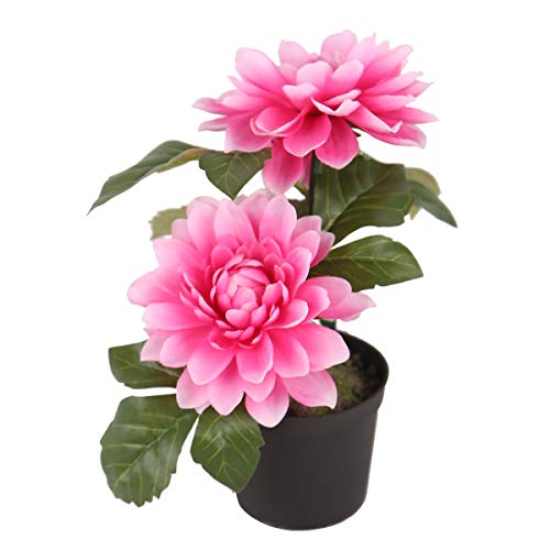 7 Potted Pink Dahlia Flowers