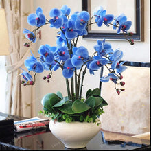 Load image into Gallery viewer, Phalaenopsis Bonsai Flower Seeds