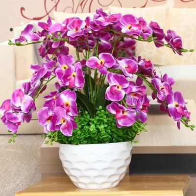 Phalaenopsis Bonsai Flower Seeds