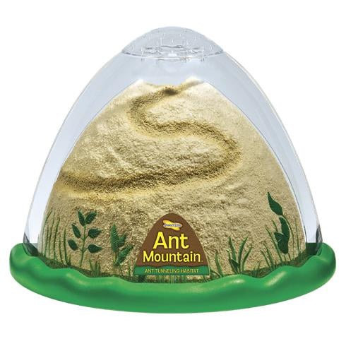 INSECT LORE ANT MOUNTAIN