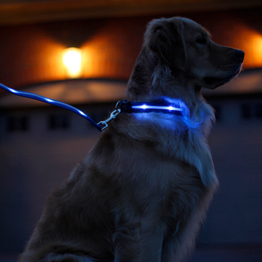 Spots Light LED Collar - Large Dog