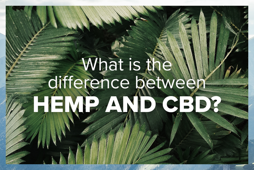 What's the difference between Hemp and CBD?