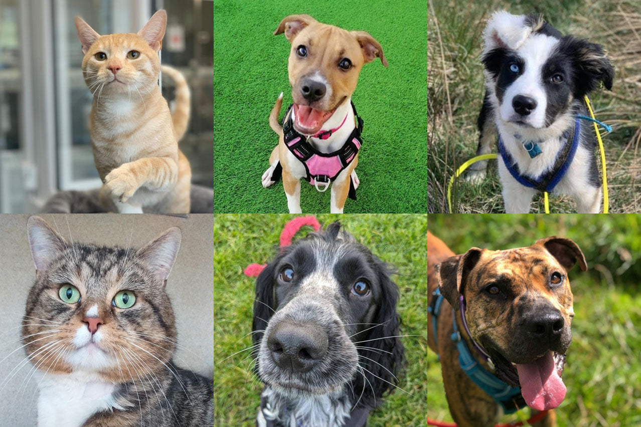 Some of the lucky dogs and cats that have found their forever home with the help of Edinburgh Dog & Cat Home