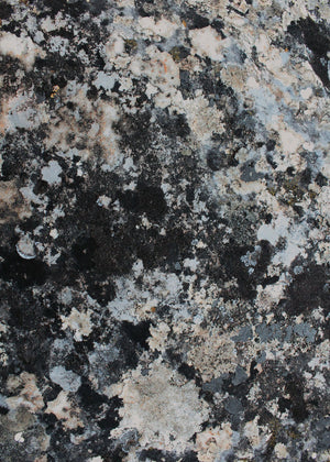 Lichen Stone Vinyl Backdrop by Photography Backdrop Club