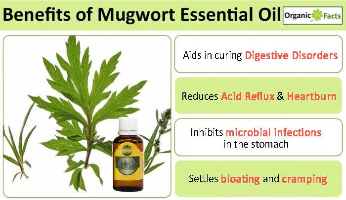 Perfect Digestion Mugwort Oil