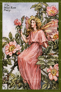 Cicely Barker 1923 - 3 - The Wild Rose Fairy