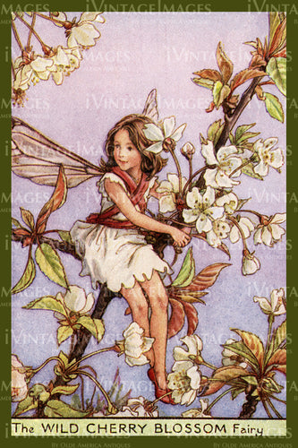 Cicely Barker 1923 - 5 - The Wild Cherry Blossom Fairy