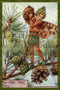 Cicely Barker 1923 - 12 - The Pine Tree Fairy