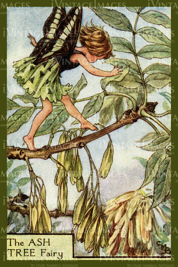 Cicely Barker 1923 - 16 - The Ash Tree Fairy