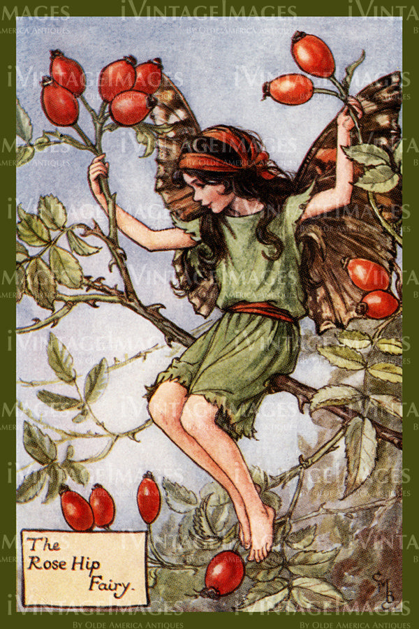 Cicely Barker 1923 - 18 - The Rose Hip Fairy