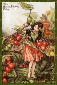 Cicely Barker 1923 - 19 - The Black Bryony Fairy