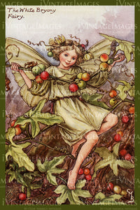 Cicely Barker 1923 - 20 - The White Bryony Fairy