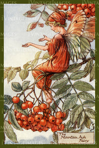 Cicely Barker 1923 - 22 - The Mountain Ash Fairy