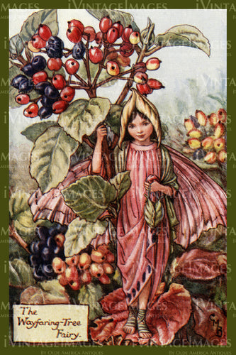Cicely Barker 1923 - 24 - The Wayfaring Tree Fairy