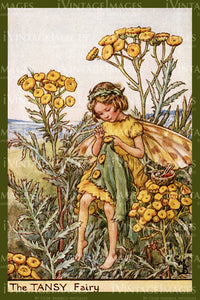 Cicely Barker 1923 - 28 - The Tansy Fairy